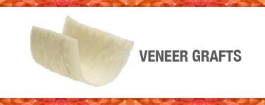 Veneer Grafts
